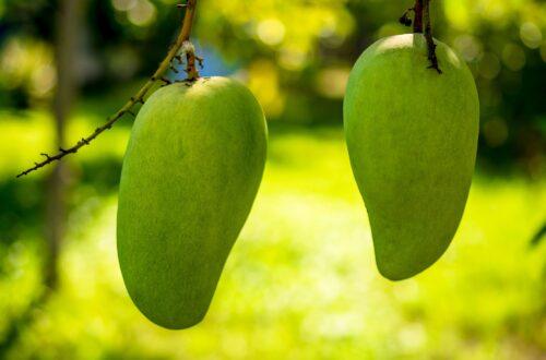 Article : Les mots sont des fruits mûrs